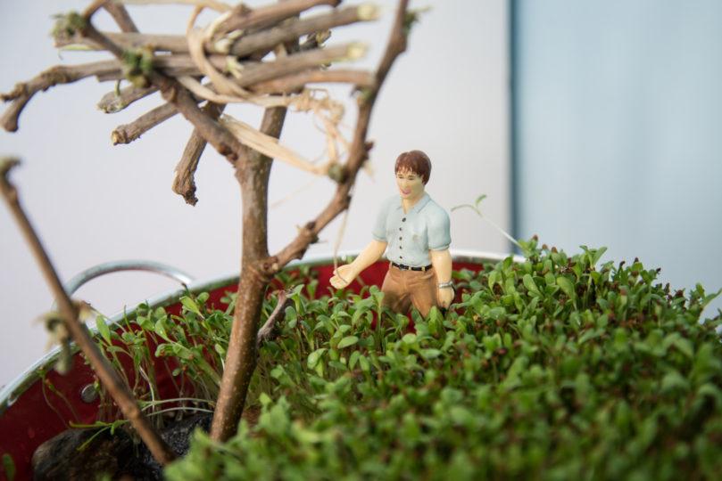 Jouer avec un jardin miniature en intérieur