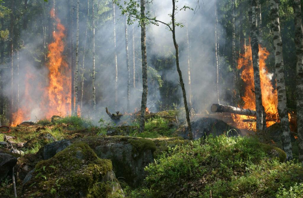 destruction-foret-rechauffement-climatique
